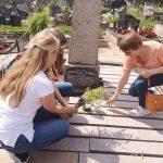 Gėlės iš D. Poškos tėviškės padedamos ant jo kapo Kaltinėnuose