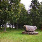 Vaižganto ąžuolynas Kumžaičiuose